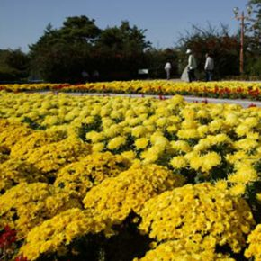 Botanical gardens that include more than 1,000 species of unique plants from giant cactuses, medicinal herbs, wildflowers to relaxing areas for picnics